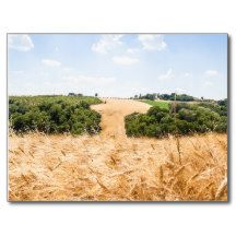 Amazing Tuscany Post Cards - $0.93