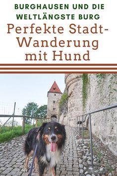 Eine perfekte Wanderung mit Hund:Rund um die längste Burg der Welt in Burghausen