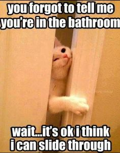Cat Humor: You forgot to tell me you're in the bathroom. Wait… it's OK, I think I can slide through.