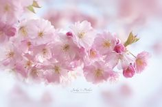 Blossom and Buds - Jacky Parker