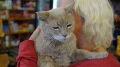 Stubbs the cat has faithfully served his constituents for 17 years, and his owner says it might be time for him to leave Alaska s political arena.