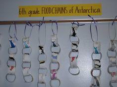 Food chains.