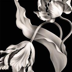 Twisting Tulips Black Wallpaper