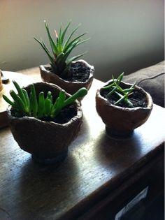 organic plant pot shapes! lovely