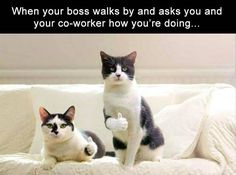 40 Funny Animal Pictures – Funnyfoto - Page 34 Funny Animal Memes, Funny Animal Pictures, Cat Memes, Funny Cats, Funny Animals, Cute Animals, Funny Memes, Squirrel Memes, Hilarious