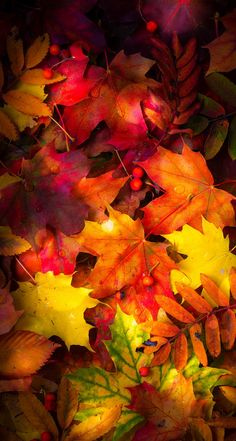 Autumn Leaves Wallpaper