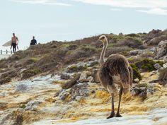 Découvrez nos premières impressions sur la région de Cape Town en Afrique du Sud en images.
