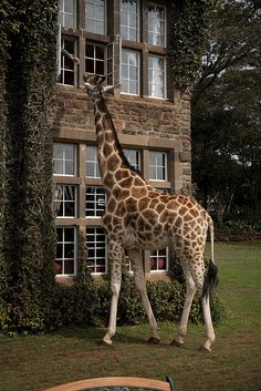 Giraffe Manor in #Nairobi #Africa