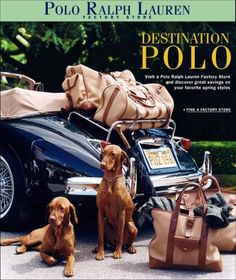 Vizslas in the Media - Ralph Lauren Ad