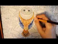 Secret Garden Coloring Book | OWL | Jardim Secreto - YouTube