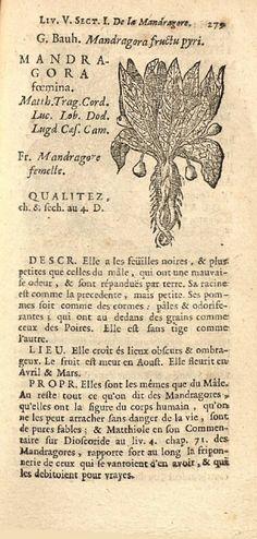 Mandragora, Female, 1737, Nicolas Deville, Histoire des plantes de l'Europe, Tome premier, Lyon, rue Merciere, Chez Duplain, p.279