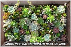 Cómo hacer un jardín vertical en forma de obra de arte, con crasas y suculentas. Súper fácil y económico. Small Succulents, Succulents Garden, Container Gardening, Gardening Tips, Succulents Wallpaper, Cactus, Charcuterie, Farmer, Landscape