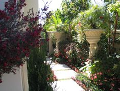 I doubt that many of us would think of placing two huge pedestal urns along a walkway, and then planting them with tropicals and palms that spill over the rim. The treatment works here, allowing the designer to feature plants that would otherwise obstruct the path if used at ground level. Instead, seasonal begonias and compact ground covers decorate the base of each urn.