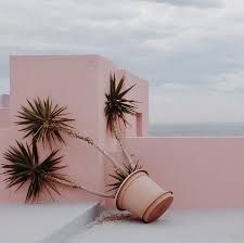 Image result for jimmy marble instagram