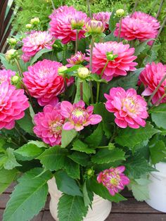 Perennials plants survive the winter and many produce beautiful flowers. Here is useful advice on growing perennials. Amazing Flowers, Beautiful Roses, Fresh Flowers, Colorful Flowers, Pink Flowers, Beautiful Flowers, Flower Planters, Flower Pots, Front Porch Plants