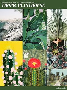 Premiere-vision-print-trends-spring-summer-2017-2018-New York-Tropical-plant-house
