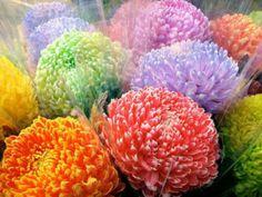 Chrysanthemums - Google Search
