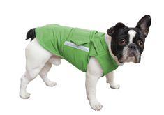 french bulldog pepper petwear custom made size winter waterproof warm coat dog coat dog raincoat clothes underbelly protection Dog Winter Coat, Dog Raincoat, Grey Dog, Mini Dachshund, Dog Jacket, Dog Wear, Dog Coats, Warm Coat, Large Dogs