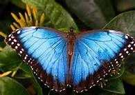 Blue Things - Bing Images