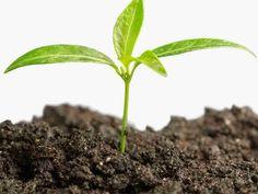 Seulottu, lannoitettu ja kalkittu yleismulta. Tämä puutarhamulta sopii kukkapenkkien perustamiseen, kasvimaalle, maanparannukseen, puiden & pensaiden istutukseen, kasvimaalle sekä nurmikon paikkauksiin. Puutarhamullan hinta on 95 € / säkki. Tätä tarvitaan aina ! Raised Garden Beds, Raised Beds, Red Wiggler Worms, Red Wigglers, Organic Compost, Soil Improvement, Worm Farm, Backyard Play, Earthworms