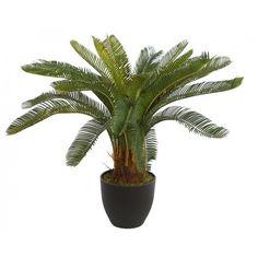 Cyca artificial de gran calidad, tiene 20 hojas y una altura de 68cm. Original y bonita planta ideal para decorar cualquier rincón de su hogar sin necesidad de mantenimiento. Cactus Plants, Natural, Home Corner, Fake Plants, Leaves, Pretty, Cacti, Cactus, Nature
