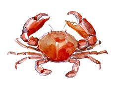 Crab - Animal Watercolor Painting - Art Print 8x10