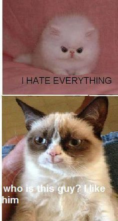 The Best of the Grumpy Cat Meme in 25 Pictures www. The Best of the Grumpy Cat Meme in 25 Pictures www. Grumpy Cat Quotes, Funny Grumpy Cat Memes, Funny Animal Jokes, Cute Funny Animals, Funny Animal Pictures, Cute Baby Animals, Funny Cats, Funny Jokes, Grumpy Cats