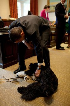 Mr President! You gotta love 1st dog no matter whether you voted for Obama. First dog rocks and doesn't ride on the roof.