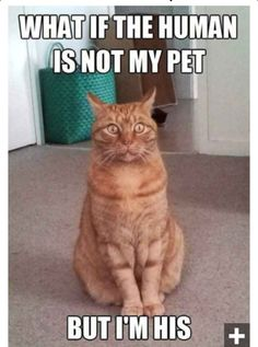 Ginger cats..... So true!!