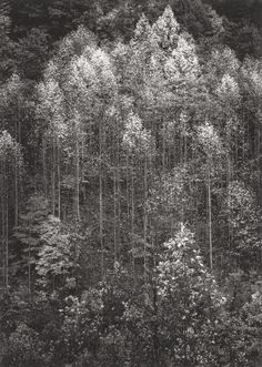 Photographs:Gelatin Silver, ANSEL ADAMS (American, 1902-1984). Portfolio Two: The NationalParks and Monuments (Fifteen Photographs), 1942-49. Gelat... Image #1