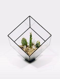 Cube Terrarium by Matthew Cleland #Terrarium #Cube #Matthew_Cleland #scoreandsolder