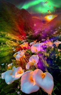 Beautiful Flowers Wallpapers, Beautiful Photos Of Nature, Beautiful Rose Flowers, Beautiful Nature Wallpaper, Nature Images, Beautiful Landscapes, Good Morning Beautiful Gif, Good Night Gif, Good Morning Gif