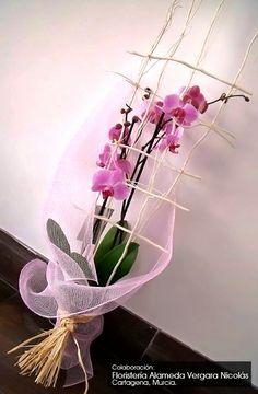 Precioso y elegante arreglo con orquídeas. Envuelto con nuestro tejido plástico tull,net