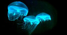 The Secret History of Bioluminescence