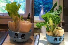Bok Choy - Just like romaine lettuce, bok choy can be regrown by placing the root end in water in a well-lit area. In a week or two, you can transplant it to a pot with soil and grow a full new head.