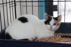 Callie is abit shy still, but she is looking for her new home!