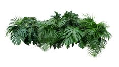 Tropical Leaves Foliage Plant Bush Floral Arrangement Nature Backdrop Isolated On White Background, Clipping Path Included. Stock Photo - Image of floral, decoration: 113573536 Leaf Images, Plant Images, Monstera Deliciosa, Tropical Leaves, Tropical Plants, Planting For Kids, Plant Background, Plant Information, Photoshop