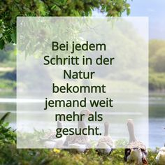Bei jedem Schritt in der Natur bekommt jemand weit mehr als gesucht. #natur #nature #nurnatur #nurnaturblog #see #berg #wandern #wanderlust #hiking #wood #free #endless #beauty #water #summer #hikingadventures #naturlover #freizeit #enjoylife #quote #inspiration #spruch #free #adventure #life Endless, Berg, Wanderlust, Inspiration, Summer, Beauty, Road Trip Destinations, Tours, Hiking