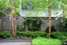 Above: In the back of the lot, where the trees and neighboring buildings bathe the area in shade, the sorts of plants that thrive include Solomon's seal (L), Japanese painted ferns, and a white-blooming ground cover (R).