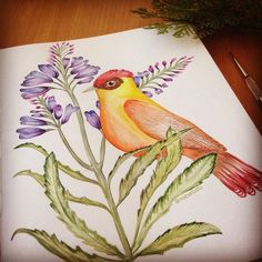 Watercolor bird by #marinabarbato