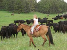Get 'em chasing cows on cattle drives at Bonanza Creek Ranch. Dude Ranch Vacations, Cowboy Ranch, Montana Ranch, Cattle Drive, Guest Ranch, Ranch Life, Wild West, Cows, Farms