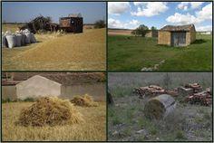 Mi pueblo y su pinar Blog de Narciso Plants, Blog, History, Flora, Blogging, Plant, Planting