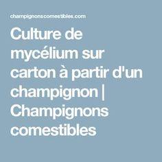 Culture Champignon, Edible Mushrooms, Lawn And Garden