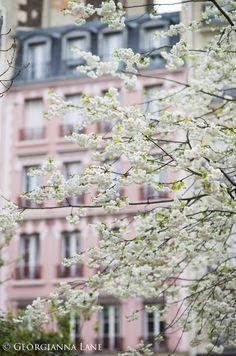 Cherry Blossoms, Paris, by Georgianna Lane