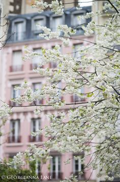 Cherry Blossoms, Paris, by Georgianna Lane. Fine Art Photography, Paris. Perfect for a girl's room!