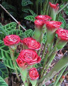 fleurs exotiques