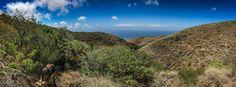 """Sanningen om Hawaiis """"naturliga skönhet"""" Hawaii är känt för sin fantastiska natur och utgör ett drömresmål för många. Men Ulf Swenson, forskare i botanik vid Naturhistoriska riksmuseet, kan avslöja hur verkligheten på öarna ser ut: i princip inget av den unika, inhemska floran finns kvar."""
