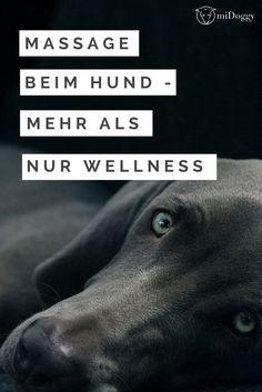 Massagen beim Hund sind mehr als nur Wellness. Alles darüber erfährst du hier.