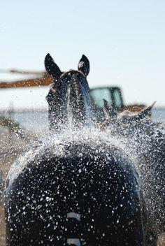 polocrosse horses hit the wash racks...