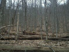 Fallen trees while hiking the Appalachian Trail. AT